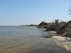 the shoreline of Barnegat Bay
